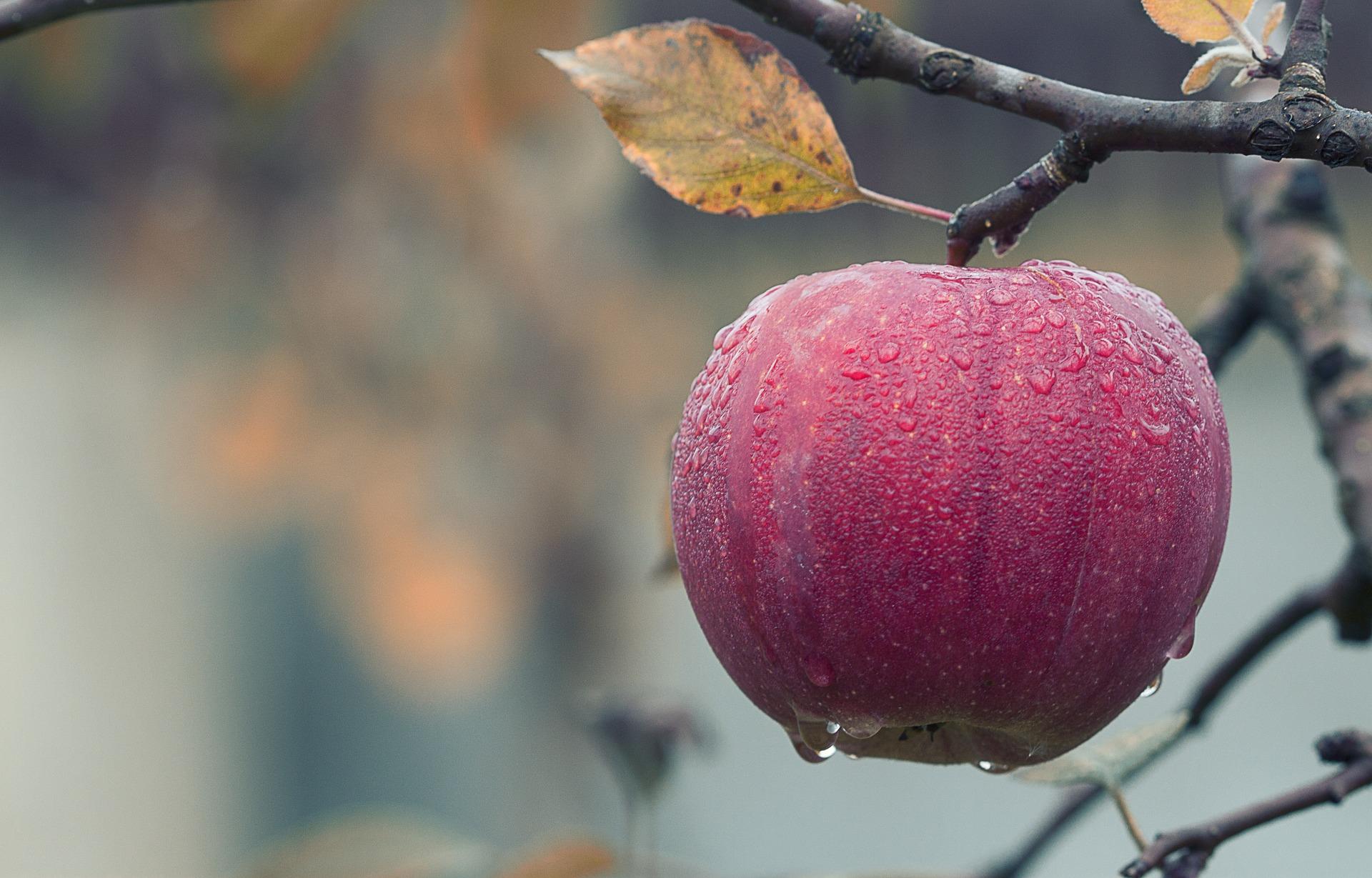 september, appel, herfst