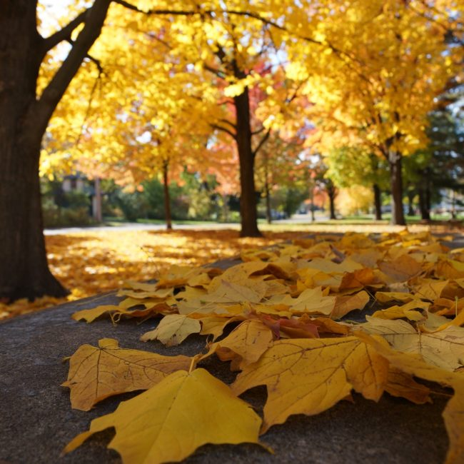 herfstbos, bladeren