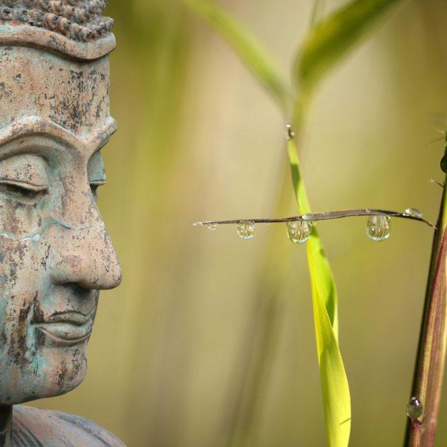 buddha, detox